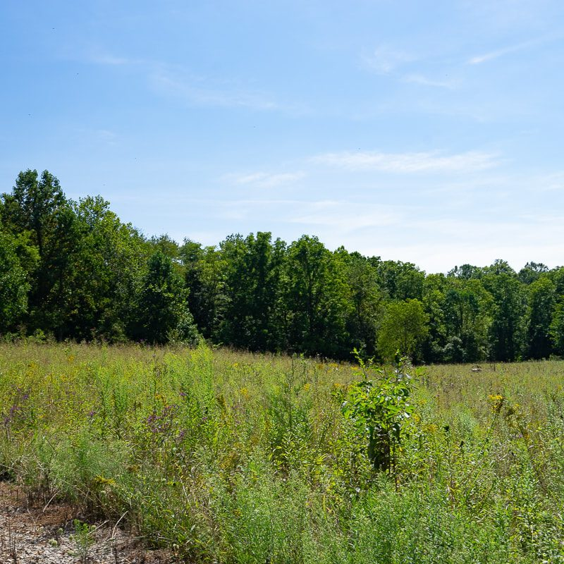 092119-Cooks-Mill-Road-Tract-2-3